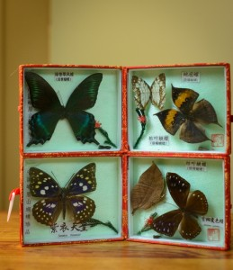 Chinese Butterflies from Emei Mountain, China